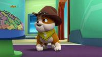 Psi Patrol – Pieski ratują konkurs gotowania – Sezon 4