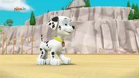 Psi Patrol – Wodny Patrol – Pieski ratują małą ośmiornicę NOWY ODCINEK!