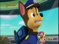 Psi Patrol – Pieski ratują niespodziankę