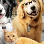 Psy i koty 3 - Łapa w górę [2020 Lektor PL]